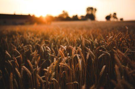 bouwen agrarisch gebied